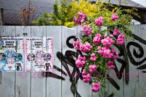 Flowers and Graffiti