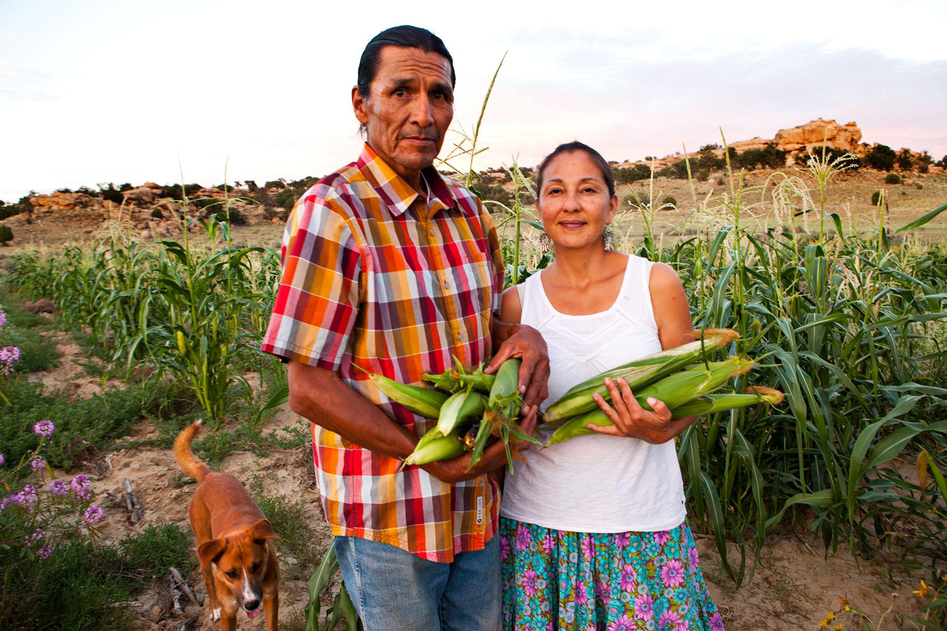 Native American Marshall Johnson and Nicole Horseherder Harvest Native Corn