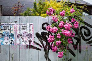 Flowers and Graffiti