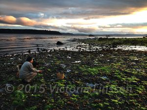 Daniel Collecting Mussels