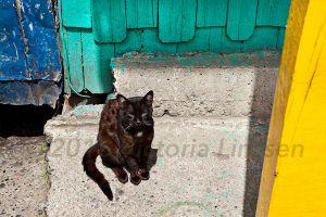 Cat in Sun