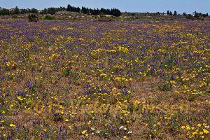 Quintero Wildflowers