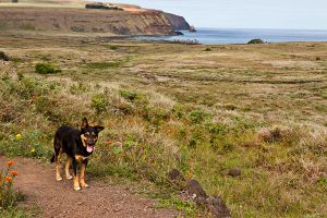 Rano Raraku Guard Dog