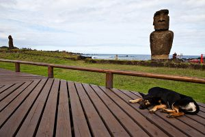 Dog and Moai