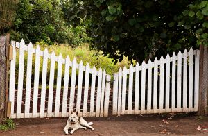 Dog at Gate