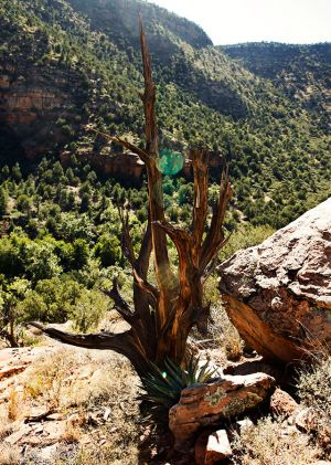 Wet Beaver Creak Trail Sedona AZ_by Victoria Linssen022.jpg