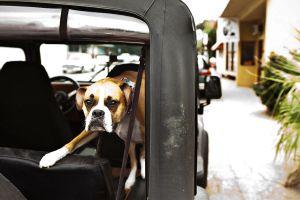 Ojai Dog Days